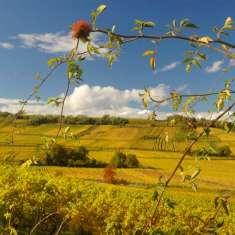 Sentier viticole du Husaren - image