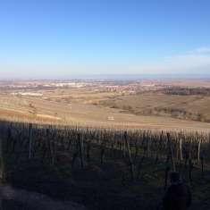 Point de vue sur le vignoble de Dorlisheim - image